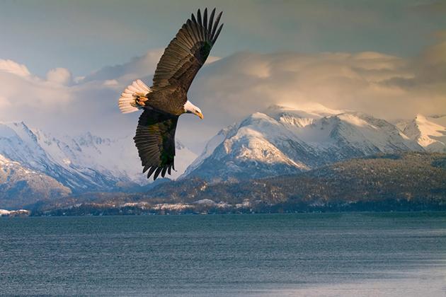 Echo On The Inside Passage Of Alaska